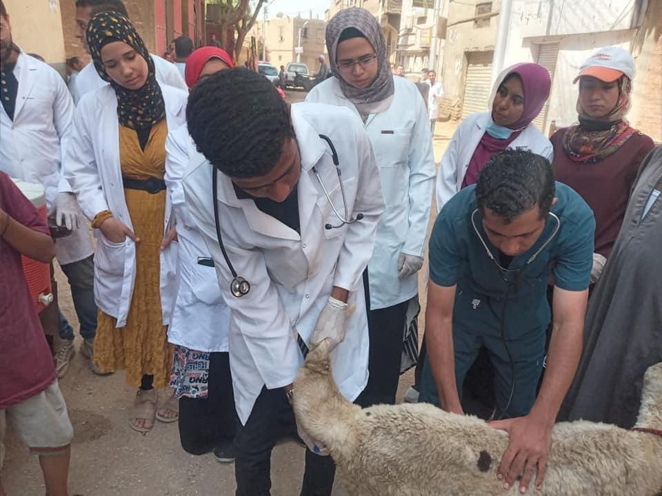 قافلة جامعة سوهاج البيطرية تنطلق لقرية آبار الملك وتعالج ٥٦٠ حالة مرضية